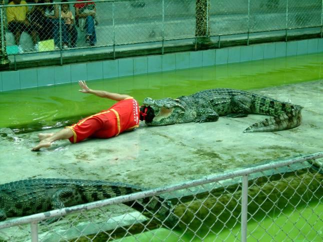 Phuket Zoo - Crocodile show I (2003.10.25)